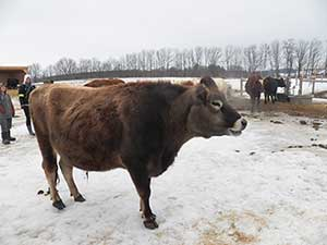 Wishing Well Farm Sanctuary Bradford Ontario