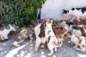 solving the stray cat and dog problem