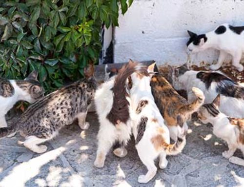 Solving the Stray Cat & Dog Problem